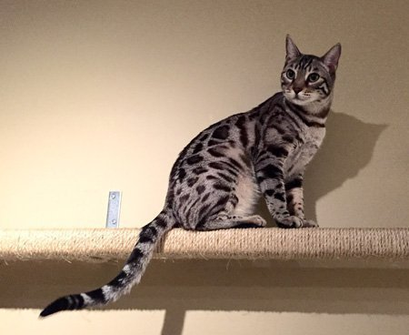 homeopathic anxiety relief for cats